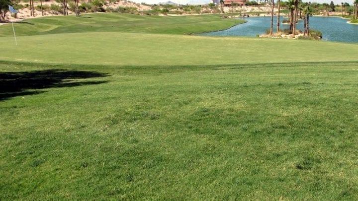 Bear's Best Golf Club 8