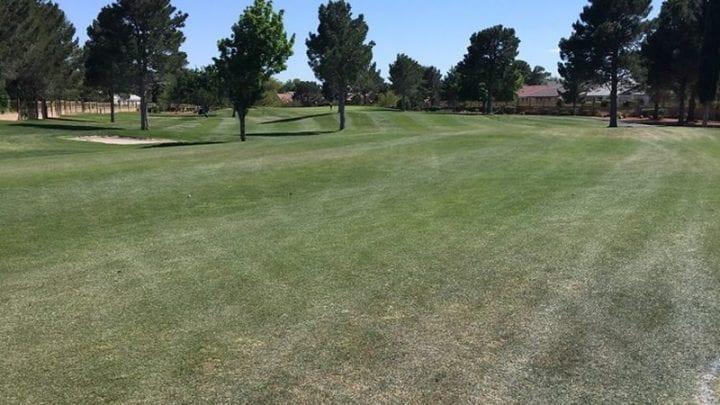 Los Prados Golf Course 8